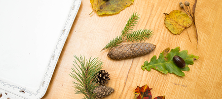 puulehtede ja viljade sobitamine
